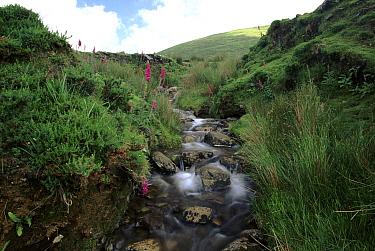 Stream in the Ring of Kerry, Kerry, Ireland, Europe  -  David Tipling/ npl