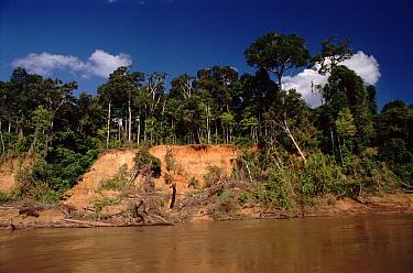 Amazonian lowland rainforest and Manu River, Manu Biosphere Reserve, Peru, South-America  -  David Tipling/ npl