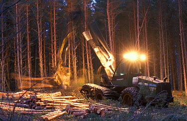 Forest harvesting machine felling Scots pines (Pinus sylvestris) at night, UK  -  Pete Cairns/ npl