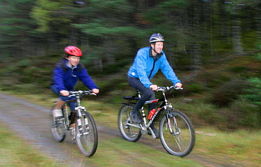 Two mountain bikers cycling along forest track in Scotland, UK  -  Pete Cairns/ npl
