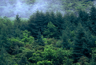 Typical Giant Panda habitat, Wolong Nature Reserve China Sichuan province  -  Lynn M. Stone/ npl