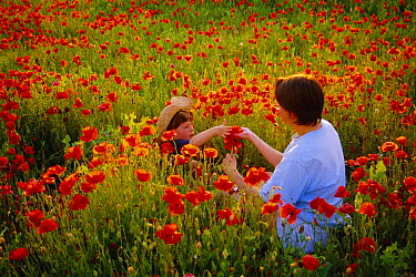 Woman and child picking poppies Minervois, France  -  Jean E. Roche/ npl