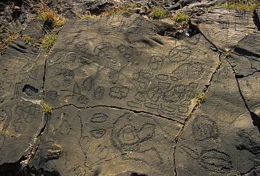 Rock engravings from the Bimbaches culture, Julan, El Hierro, Canary Islands  -  Jose B. Ruiz/ npl
