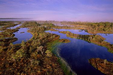 Mannikjarve raba bog viewed from tower, Endla Nature Reserve, Estonia  -  Niall Benvie/ npl