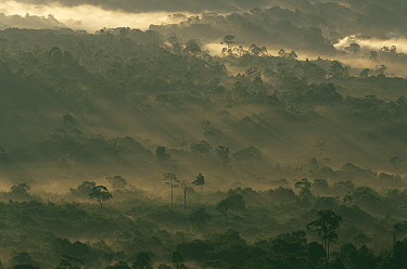 Kakamega Forest at dawn, Kenya  -  Bernard Castelein/ npl