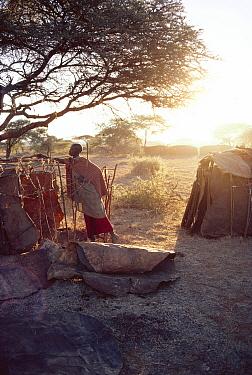 Maasai traditional ceremony, Kedong Valley, Rift valley, Kenya Woman building ritual house in E-unoto ceremony 1985  -  Jabruson/ npl