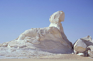 Chalk rock eroded by wind and weathering, resembles the Sphinx, White desert, Egypt  -  Dan Rees/ npl