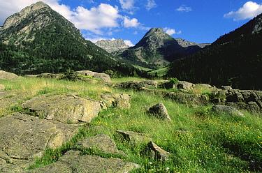 Sant Nicolau valley, Aigues Tortes National Park, Pyrenees, Spain  -  Jean E. Roche/ npl