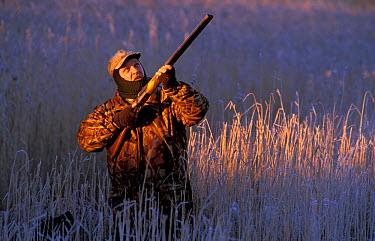 Nigel McMullan shooting wildfowl in reeds Montrose Basin LNR, Angus, Scotland, UK  -  Niall Benvie/ npl