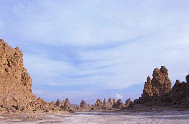 Mineral 'chimneys' of Lac Abbe, Djibouti, East Africa Formed in lake, now exposed on plain sea  -  Marguerite Smits Van Oyen/ npl
