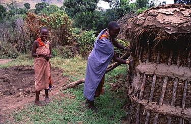 Maasai woman waterproofing hut with cow dung and mud mixture, Olonana village, Kenya  -  Pat De La Harpe/ npl