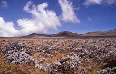 Short afroalpine meadows of High Sanetti plateau landscape, Bale Mountains NP, Ethiopia, East Africa  -  Charlie Hamilton James/ npl