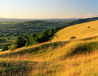 Unimproved limestone grassland on Cotswold escarpment, Selsley Common, Gloucestershire, UK 2003  -  Nick Turner/ npl