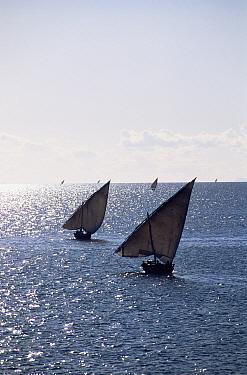 Fishing dhows off Zanzibar Island, Tanzania Africa  -  Pete Oxford/ npl