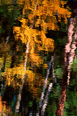 Autumn trees reflected in water, USA  -  Larry Michael/ npl
