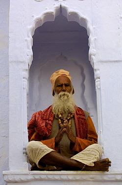 A Gorakhnathi Yogi, holy man from Mahayogi Machhendra Nath Temple in Pushkar, Rajasthan, India, October 2006  -  Pete Oxford/ npl