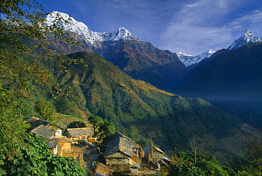 Farmstead in Ghandruk, with Annapurna on the left and Machhauchhre on the right, Himalayas, Nepal  -  David Noton/ npl