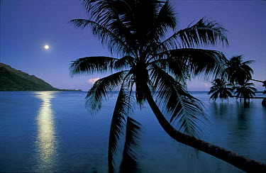 Moonlight over Opunohu bay, Moorea, Tahiti  -  David Noton/ npl