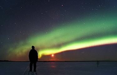 Person watching Aurora borealis colours in night sky, northern Finland, winter  -  Jorma Luhta/ npl