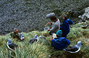 Filming Sir David Attenborough in Grey Headed albatross colony for BBC Life in the Freezer  -  Ben Osborne/ npl