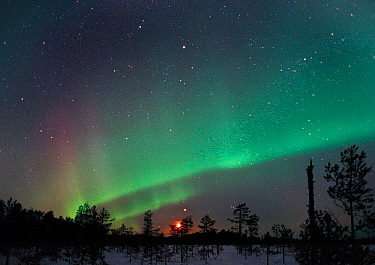 Aurora borealis colours, moon and Jupiter in night sky, northern Finland, winter 2002  -  Jorma Luhta/ npl