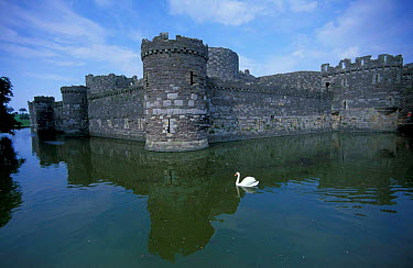 Beaumaris castle with swan on moat, Anglesey, Wales, UK built by King Edward I 1295-1330  -  William Osborn/ npl