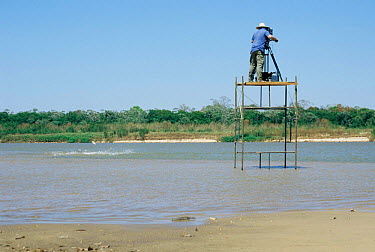 Camerman Martyn Colbeck filming Boto, Bouto river dolphins (Inia geoffrensis) from platform, Araguia river, Brazil during making of BBC Planet Earth series 2004  -  Conrad Maufe/ npl