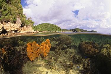 Split-level of Sponge underwater at low tide, Indo-Pacific  -  Jurgen Freund/ npl