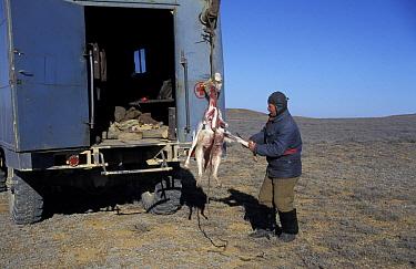 Saiga antelope hunter skinning Saiga, Betpak Dala desert, Kazakhstan, 1997 (Saiga  -  Dan Rees/ npl