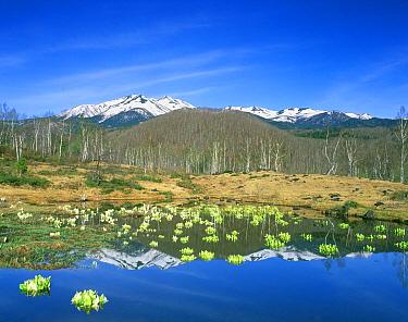 Mizubasho and Mt Norikura reflected in lake, Ichinose, Nagano, Japan  -  Rob Tilley/ npl
