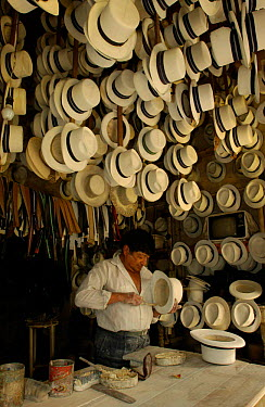 Alberto Pulla, Panama hat maker, Cuenca, Andes, Ecuador Hats made from Toquilla straw  -  Pete Oxford/ npl