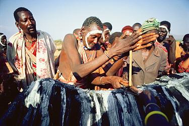 Maasai 'Emowuo-o-lkiteng ceremony, Kedong Valley, Rift valley, Kenya Lighting ceremonial fire on back of ritual ox 1985  -  Jabruson/ npl
