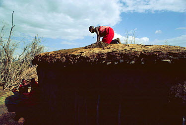 Maasai traditional ceremony, Kedong Valley, Rift valley, Kenya Mother prepares roof of ceremonial hut 1985  -  Jabruson/ npl