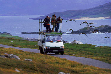 Filming imprinted Greylag geese flying for BBC tv series 'Supernatural', Scotland  -  John Downer/ npl