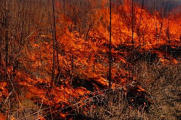 Prairie fire in Wisconsin, USA  -  Larry Michael/ npl