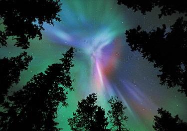 Aurora borealis colours in night sky showing corona, northern Finland, winter  -  Jorma Luhta/ npl