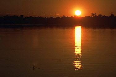 Sunset over Rio Negro river, Amazonia, Brazil  -  Nick Gordon/ npl