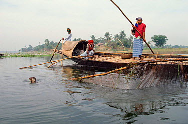 Fishermen with Otters trained for fishing Bangladesh  -  John Downer/ npl