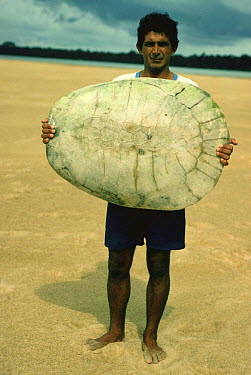 Caboclo fisherman holding up Arrau turtle shell (Podocnemis expansa) Roraima, Brazil  -  Nick Gordon/ npl