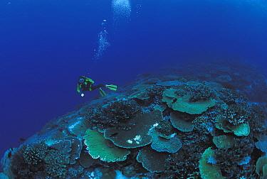Diver at coral reef Sulu-sulawesi seas, Indo Pacific  -  Jurgen Freund/ npl