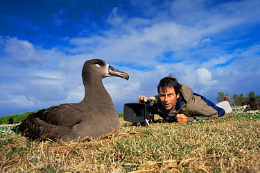 Michael Pitts filming nesting Black footed Albatross (Diomedea nigripes) Midway Island, Pacific Ocean island, 1996  -  Michael Pitts/ npl