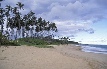 Tangelle beach, nesting site for endangered marine turtles, Sri Lanka  -  Nick Barwick/ npl
