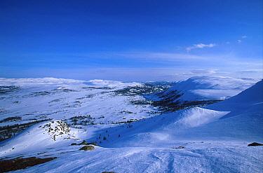 Winter landscape at dusk, Norefjell mountains, Buskerud, Norway  -  Asgeir Helgestad/ npl