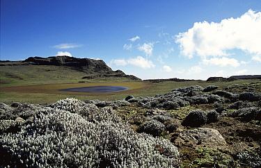 Afroalpine habitat, Bale NP, Simien highlands, Ethiopia  -  George Chan/ npl