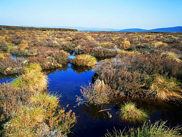 Typical moorland at Cairngorm Highlands Scotland, UK  -  Jim Hallett/ npl