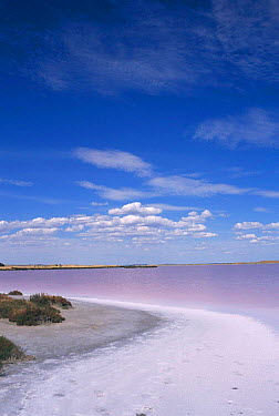 Pink lakes, Meningie, S Australia Colour caused by (Dunalialla salina) and (Halo) bacteria  -  William Osborn/ npl