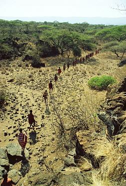 Maasai 'Emowuo-o-lkiteng ceremony, Kedong Valley, Rift valley, Kenya Initiates walk to sacred Olive tree for blessing 1985  -  Jabruson/ npl