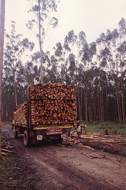 Evergreen forest being logged, Periyar NP, Kerala, India  -  Vivek Menon/ npl