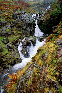 Dungeon ghyll force waterfall, Cumbria, UK  -  Michael Hutchinson/ npl