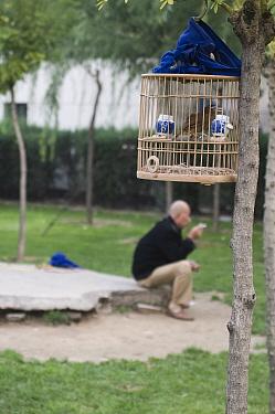 Bird keeper sitting in park with his Hwamei (Leucodioptron canorum, Garrulax canorus) in central Beijing, China September 2008  -  David Tipling/ npl